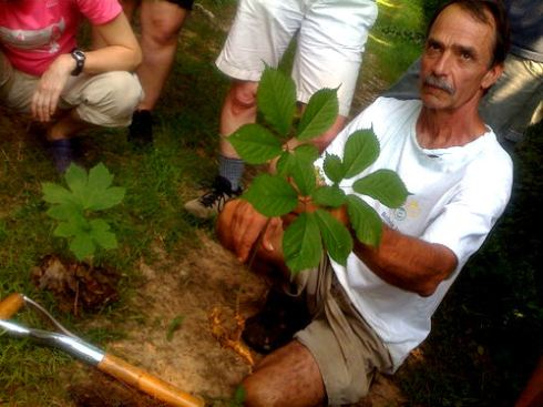 Robbie with American ginseng