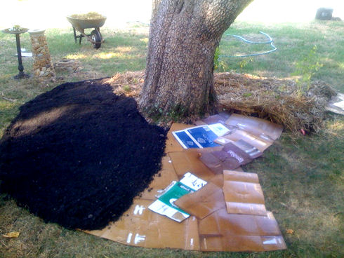 Lasagna gardening/sheet mulching - cardboard, then soil, then straw mulch