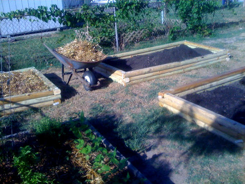 Raised beds for fall vegetables in varying degrees of completion