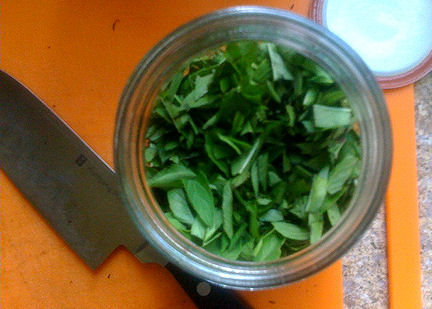 Thai Basil filling jar for herbal vinegar