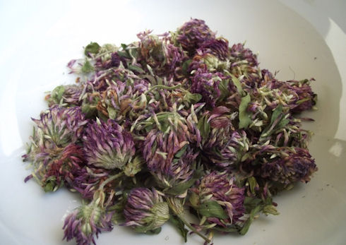 Red Clover, dried